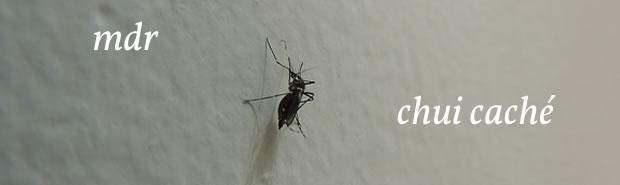 moustique-mdr