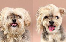 Des photos de chiens avant et après leur toilettage, la dose de mignon du jour!