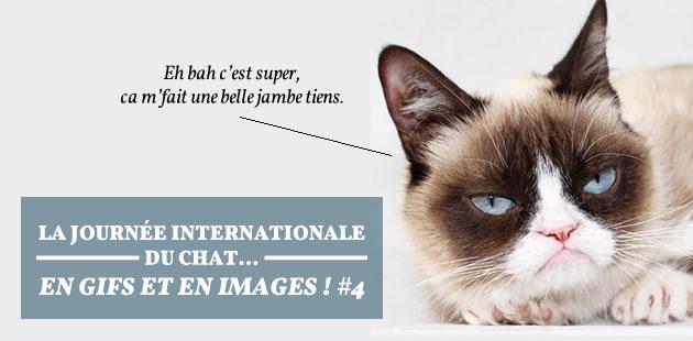 La journée internationale du chat… en gifs et en images! #4