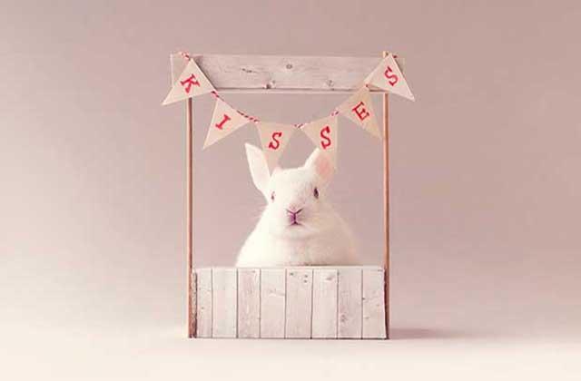 Un tout petit lapin fait un shooting photo et fait fondre ton cœur