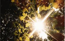 Une playlist d'automne qui sent bon les balades en sous-bois et le vent frais!
