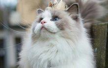 Aurora Purr, le chat bien plus beau que nous tous réunis