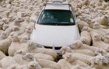 Sommes-nous tous des moutons? Le conformisme à la loupe