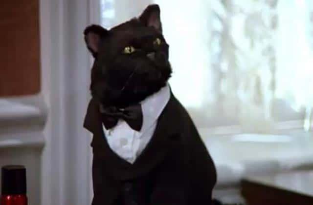 La vie secrète des chats débarque sur TF1 !