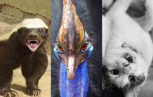 Test — Quel animal vénère deviens-tu quand tu es de mauvais poil?