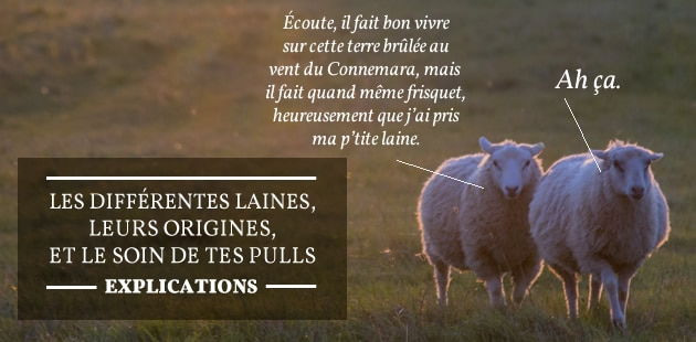Les différentes laines, leurs origines et le soin de tes pulls — Explications