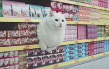 Des chats, un supermarché, la meilleure vidéo de l'année