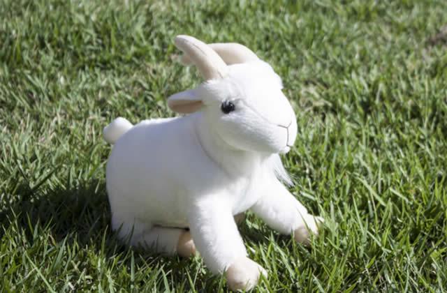Envoyez d'adorables peluches chèvres avec You Goat Mail, le plus chou des services