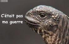 Un bébé iguane traqué par une horde de serpents dans la vidéo animalière la plus badass du moment