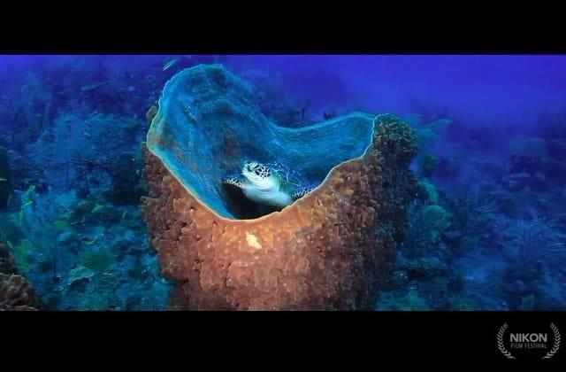 Un joli court-métrage rend hommage à notre belle planète (et donne des envies d'ailleurs)