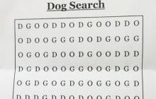 dog-mot-cache-challenge