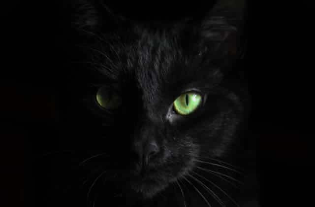 Vendredi13, chat noir… d'où viennent les superstitions?