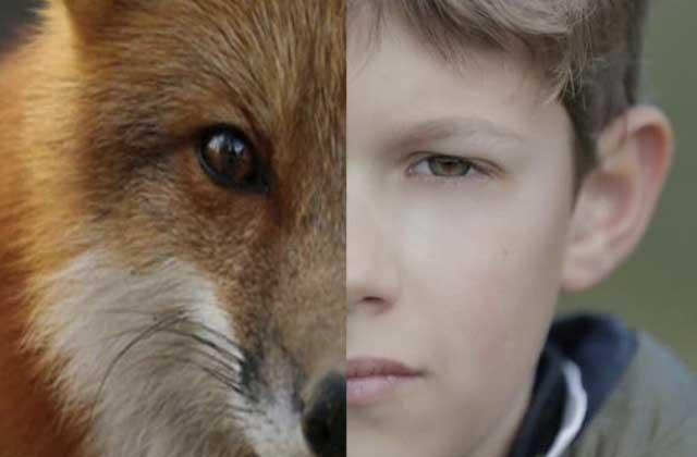 Je suis un nuisible défend les renards en danger, et c'est émouvant