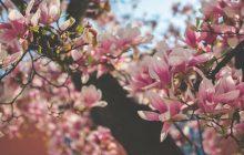 Le printemps est de retour, et ça se fête! #ViveLePrintemps