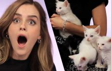 Emma Watson parle de féminisme et de sa carrière… entourée de chatons!