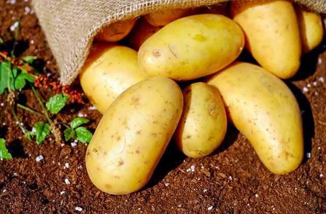 La bonne idée pour éviter le gâchis des pommes de terre « moches»