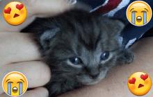 Le chaton que j'ai sauvé, adopté et qui m'a accompagnée jusqu'aux bancs de la fac!