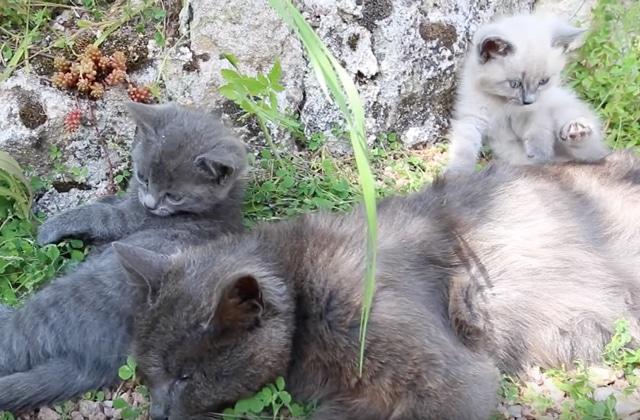 Quitter Paris pour aller faire pousser des légumes, avec les chatons de la ferme d'Ophélie