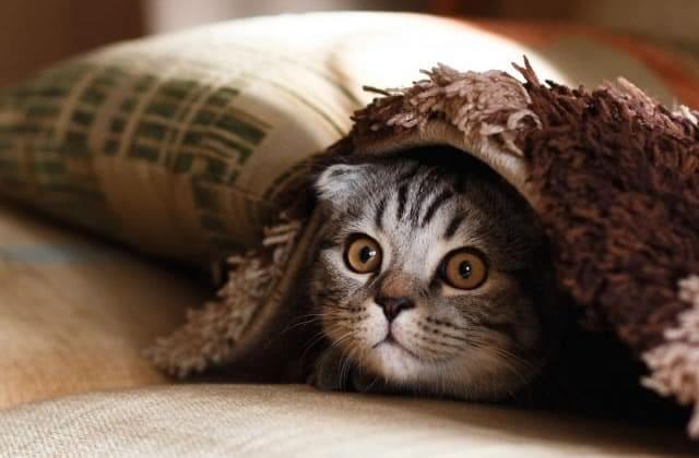 Pourquoi les chats fixent-ils le vide, en ayant l'air de voir des fantômes?