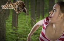Pourquoi certaines vivent très mal les piqûres de moustiques