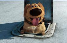 Un traducteur animaux-humains, pour taper la discut' à son chien, bientôt une réalité?