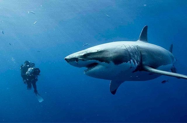 Plongez dans l'enfer de 47Meters Down avec ce trailer truffé de requins!