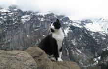 L'histoire du chat sauveteur qui guida un randonneur blessé