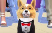 Tous à vos gamelles, les chiens et les chats débarquent dans les Sims4!