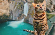 Craquez sans plus attendre pour Suki, le chat intrépide ET BIEN TROP CHOU d'Instagram