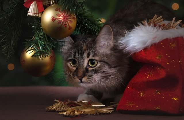 Idées cadeaux de Noël pour chats et chiens!