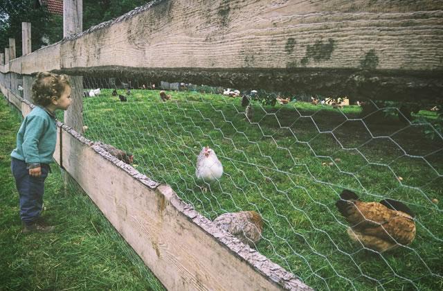 Passer sa vie avec des enfants et des animaux, le quotidien rêvé de Marion
