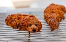 Merci la vie pour ce compte Instagram qui met des chiens dans la nourriture