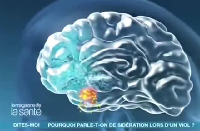 Sidération et dissociation pendant un viol: les 2 mécanismes de survie du cerveau contre l'arrêt cardiaque