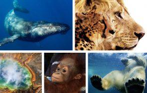 5 beaux documentaires sur la nature et les animaux