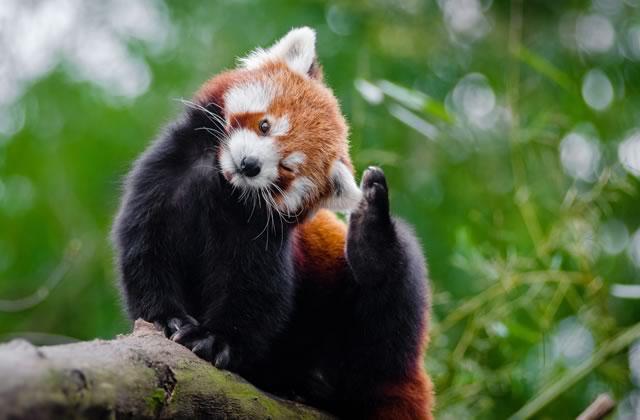 60% des animaux sauvages ont disparu depuis 1970, mais il reste de l'espoir