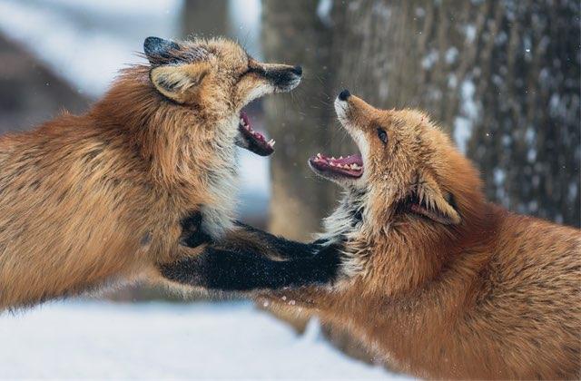 Comment bien envenimer une dispute et t'assurer qu'elle ne mène à rien