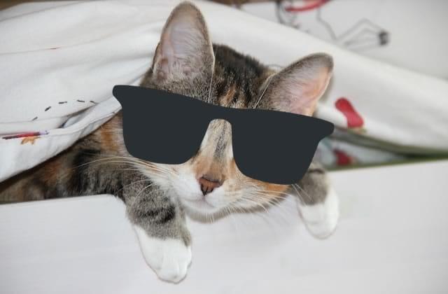 Enfin des filtres Snapchat pour… ton chat !