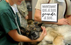 Je soigne des animaux chaque jour, vis ma vie d'assistante vétérinaire!