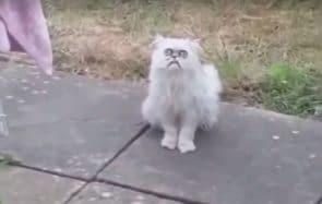 La vérité sur ce chat errant très moche