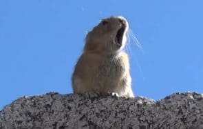Regarde ce pika chanter du Queen, et dis MERCI INTERNET