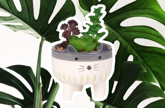 7 plantes faciles d'entretien pour verdir ton chez toi