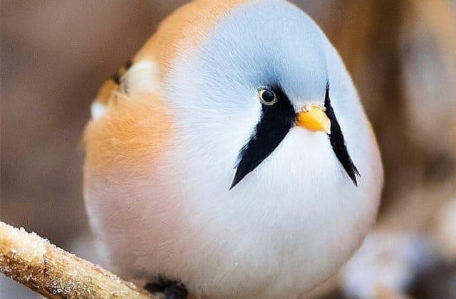 Les animaux ronds sont-ils les plus mignons ?
