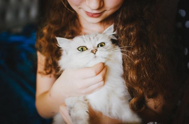 je cherche un homme qui aime les chats