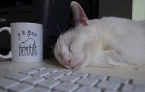 Comment vivre avec un chat teste ma fibre maternelle