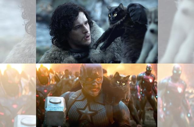 Ce chat s'invite dans les scènes cultes du cinéma et va égayer ta vie