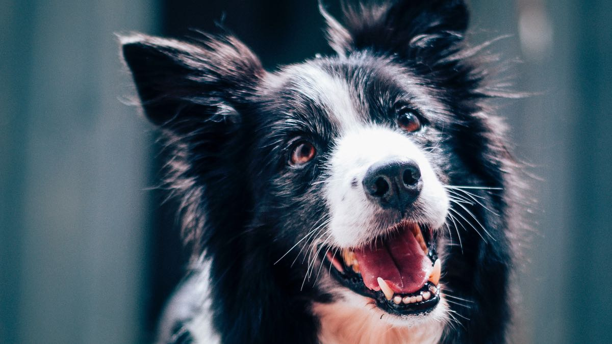 4 choses que j'aurais aimé savoir avant d'adopter un chien