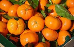 La différence entre la clémentine et la mandarine : le mystère résolu