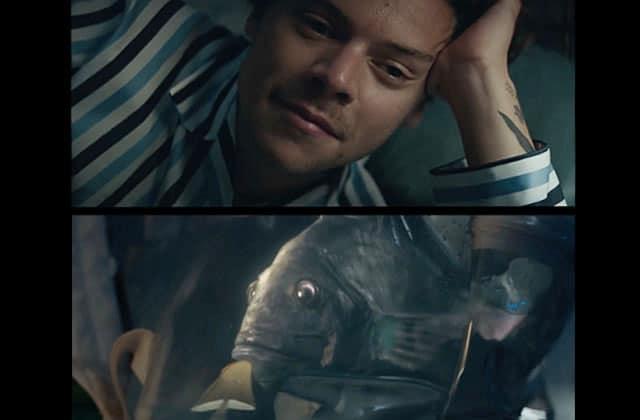 Harry Styles sauve un poisson dépressif et part à l'aventure