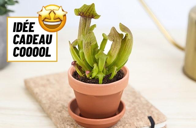 idée cadeau cool plante carnivore
