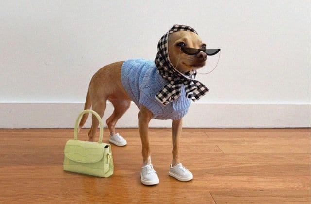Découvre le compte insta de ce chien qui a plus de style que toi !